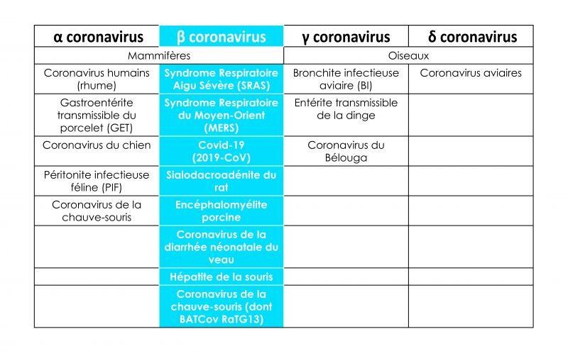 Tableau explicatifs des différents impacts du coronavirus sur les mammifères (dont les hommes) et sur les oiseaux.